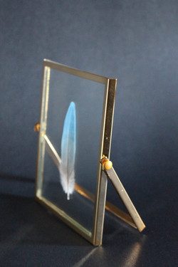 Macaw Feather in Collapsable Gold Frame