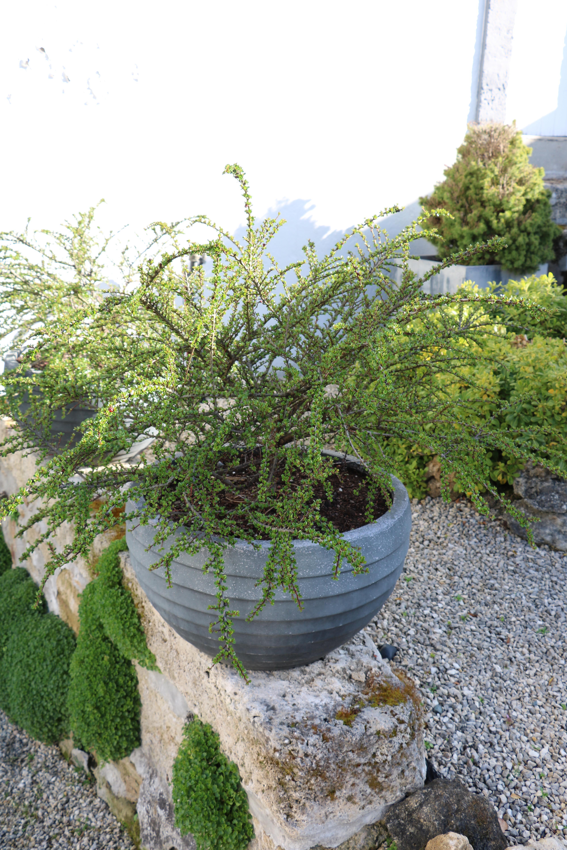 Petit arbuste