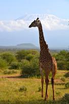 Giraffe&Kilimanjaro
