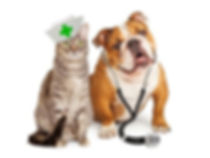 pet-pharmacy.jpg
