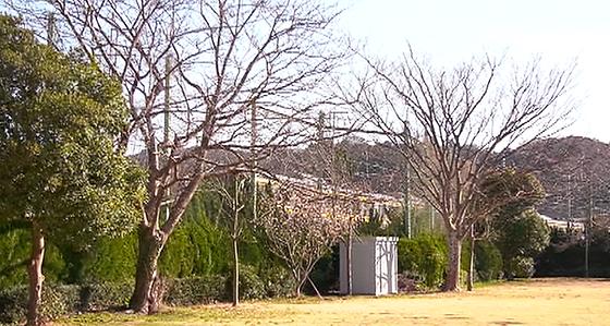 nakagawa_hatsukoi_046.png