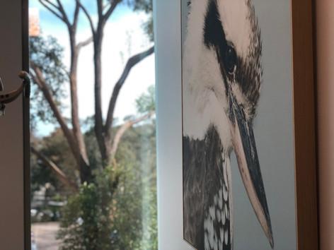 The Kookaburra room