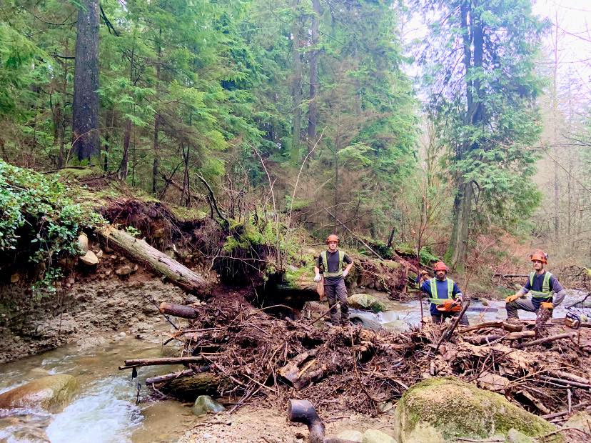 We do it all. Today we're clearing a log