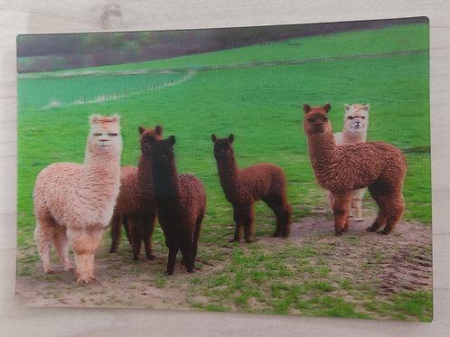 Alpaka-Postkarte 3D