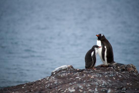 Wildlife Antarctica