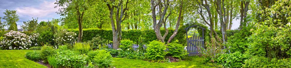 Garden-panorama-954139432_6509x1533.jpeg