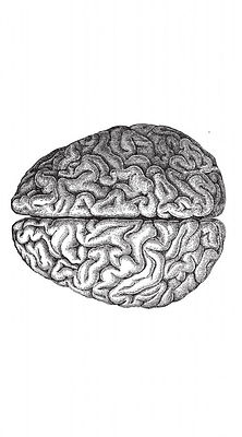 brainflip.jpg