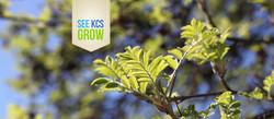 KCS_SeeKCSGrow_FB