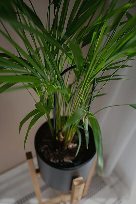 plant stant