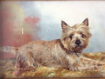 The Cairn Terrier; Small dog - Big Character!