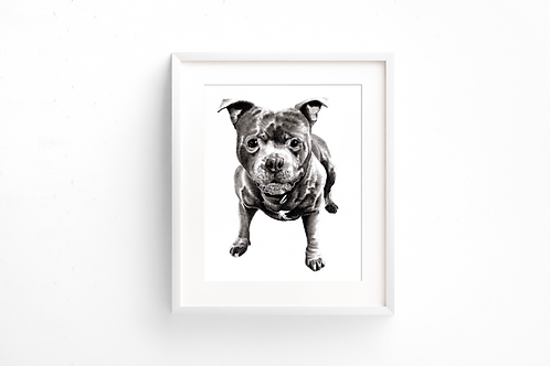 Staffie - Print