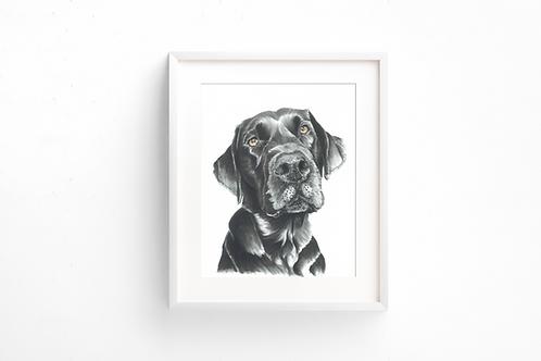 Labrador - Adoration - Print
