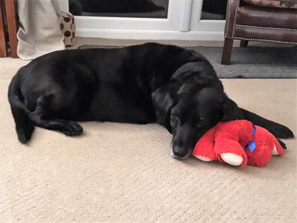 Coco and Red Dog