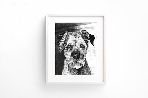 Border Terrier - Print