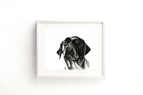 Labrador - Far Horizon - Print