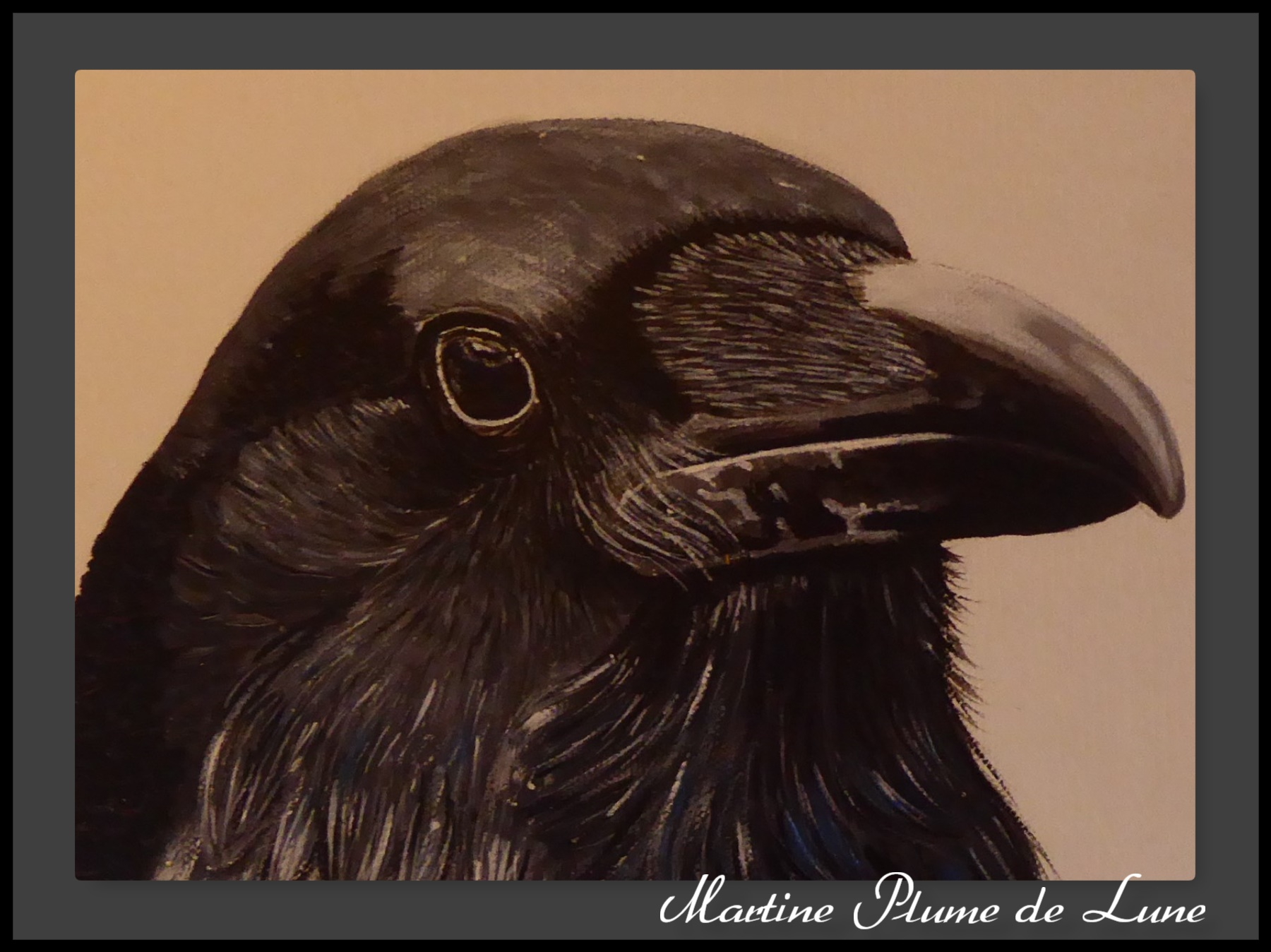 Kangi (grand corbeau) detail