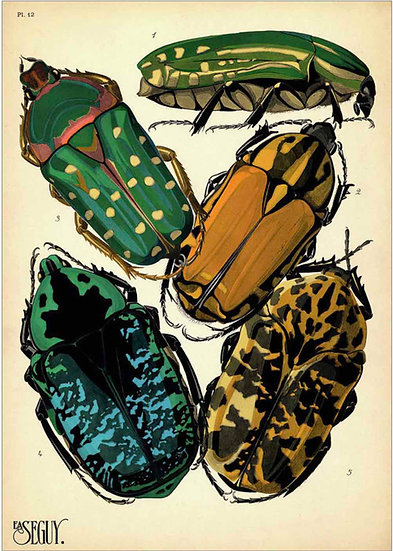 INSECTS 7 - PRINT