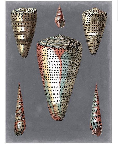Pierre Redoute Midnight shells 11