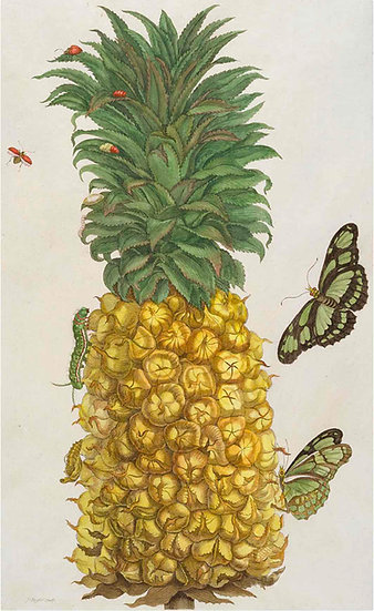 PINEAPPLE AND BUTTERFLIES - ANTIQUE FRUIT PRINT