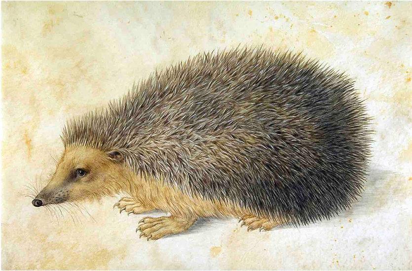 A Hedgehog - Hans Hoffmann