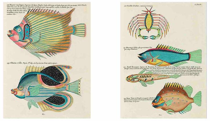FANTASTICAL FISH