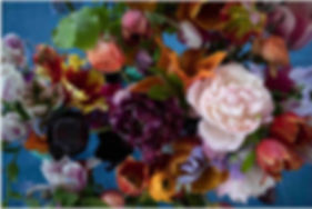 dutch tulip 5 copy.jpg