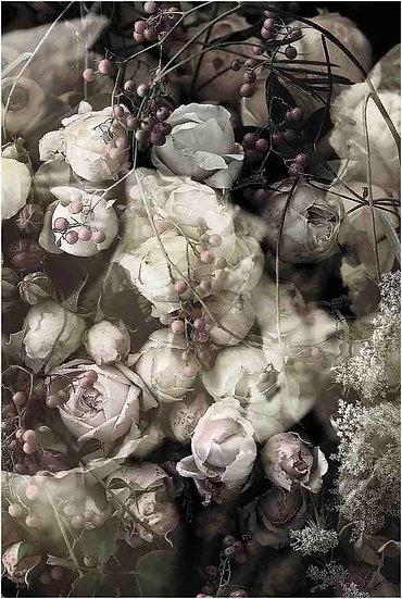 VENETIA - LUCY ROSE