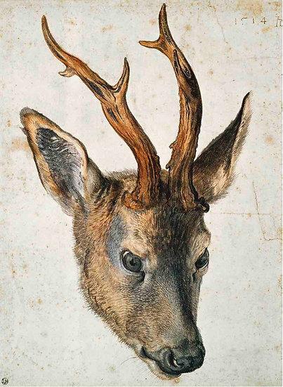 Head Of A Roe Deer
