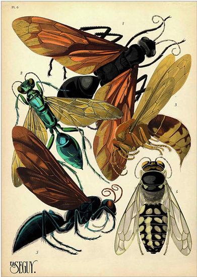 INSECTS 5 - PRINT