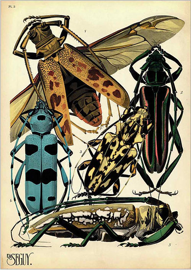 INSECTS - PRINT