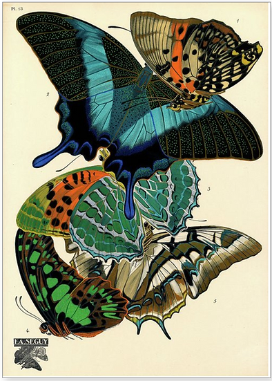 BUTTERFLIES -GREETING CARD