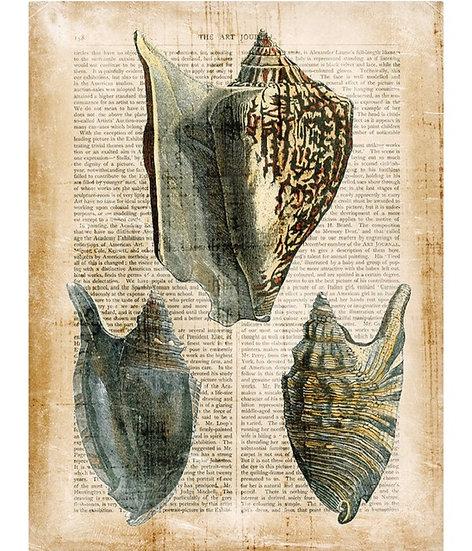 Antiquarian shells 1