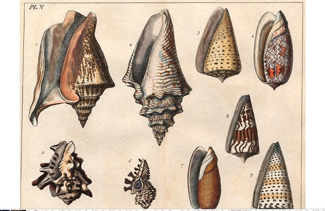 Antique Shell chart 1