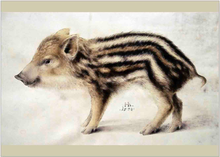 A WILD BOAR PIGLET GREETING CARDS