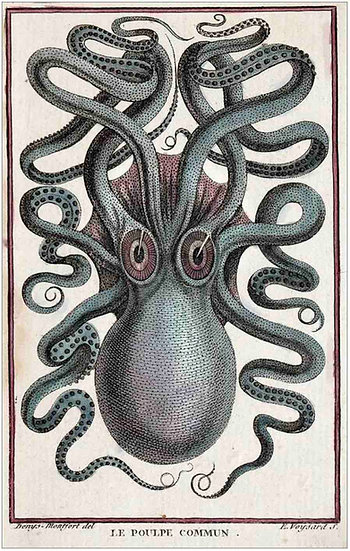 1801 octopus Pierre Denys de Montfort (18th century octopus)