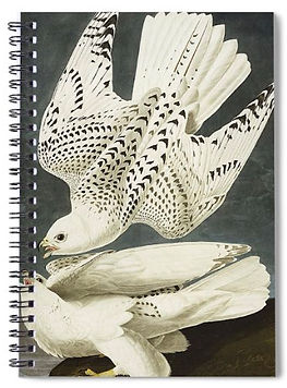 OR JER FALCON notebook