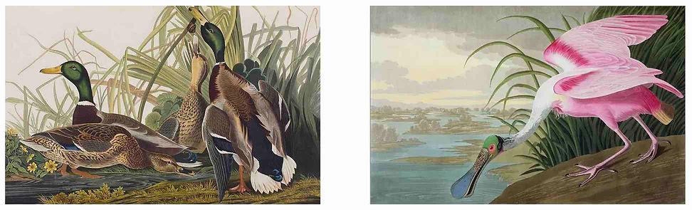 BIRDS OF AMERICA.jpg