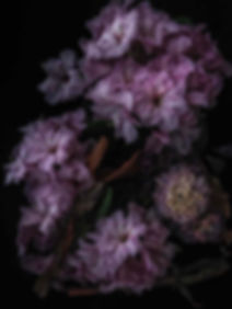 2018.04.26_Rhododendron-54111-Bearbeitet