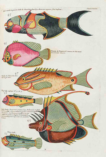 TROPICAL FISHES OF THE EAST INDIES