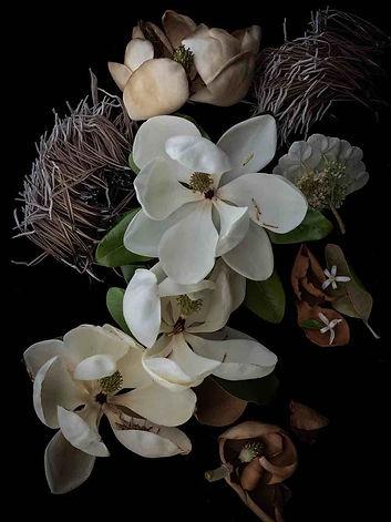 2018.06.17_Magnolia grandiflora-54490-Be
