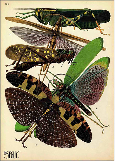 INSECTS 6 - PRINT