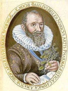 BASILIUS BESLER 1561-1629 .jpg
