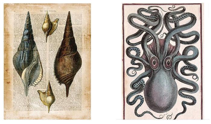 SHELS AND OCTOPI