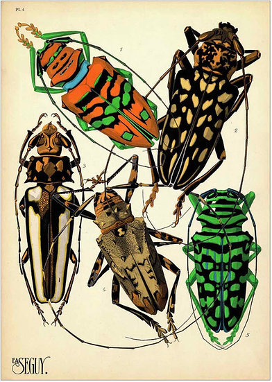 INSECTS 3 - PRINT