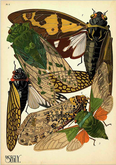 INSECTS 2 - PRINT