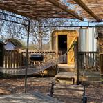 Tilda Rice woodland view.jpg