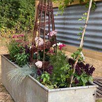 Vilanelle planter