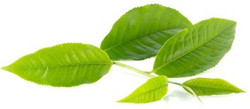 green-tea-leaves