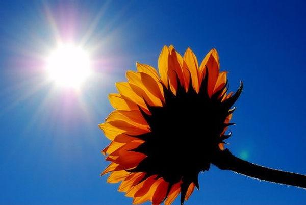 za zivot je potrebno sunce.jpg