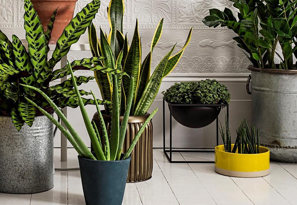 צמחים בבית - יופי טקסטורות ומגוון